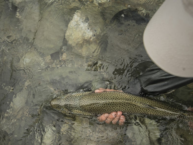 The Seven American Trout Species at Greatest Risk