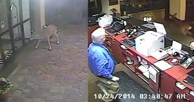 Video: Pennsylvania Buck Sprints Through Hotel Lobby