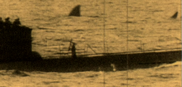 Celebrating Shark Week 2013: 10 Great Shark Stories and Videos