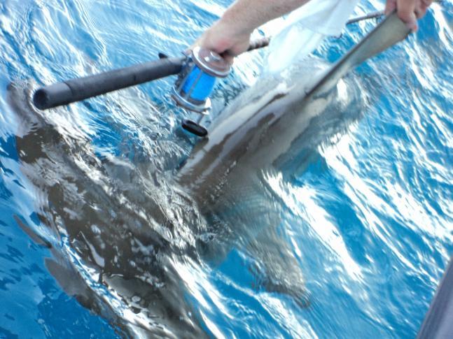 httpswww.fieldandstream.comsitesfieldandstream.comfilesimport2011importPhotoGallery2011trophyroom21589fishing_052.JPG