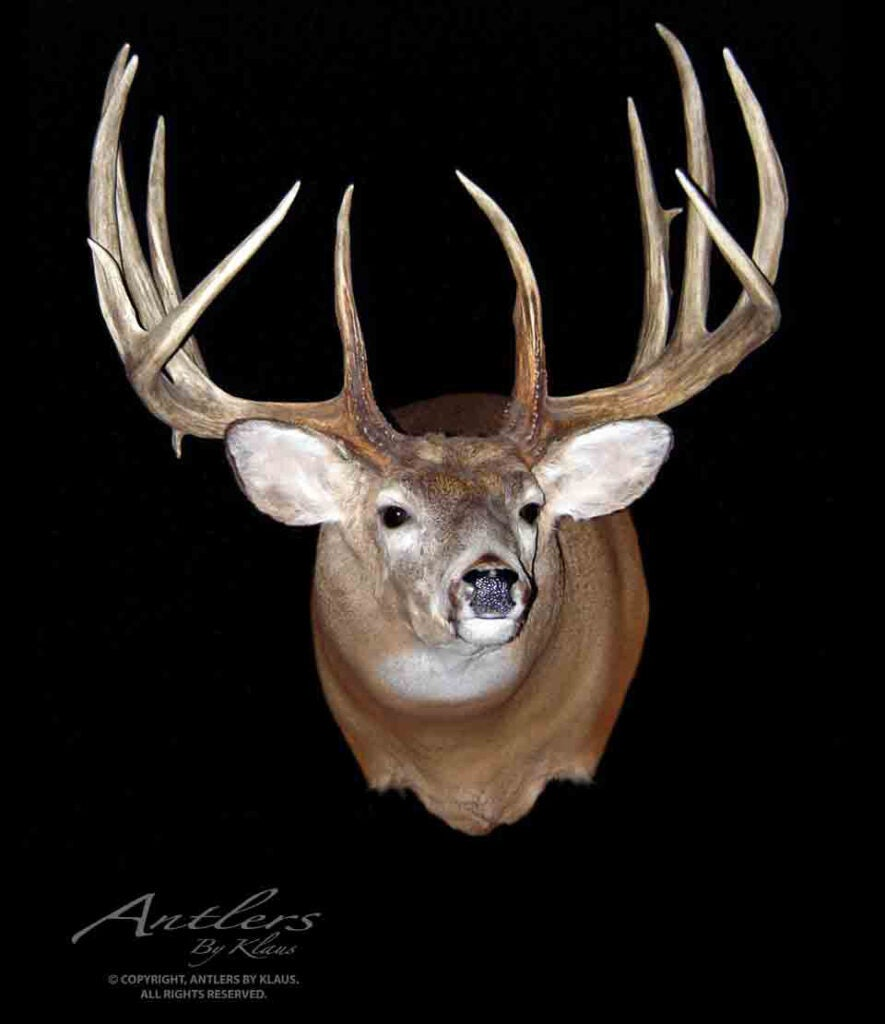Antlers by Klaus