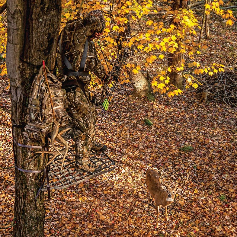 Bowhunter in tree stand