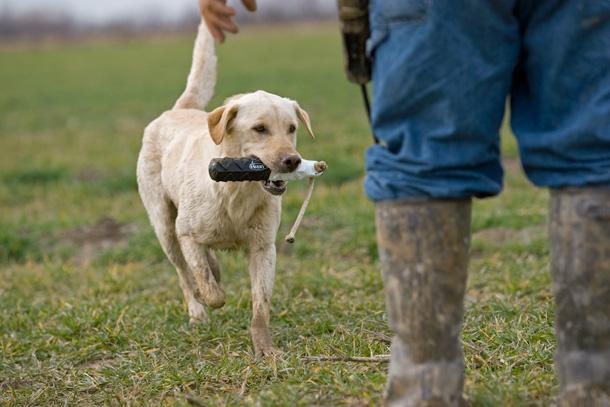 Gun Dogs: A Game That Will Turn Your Pup Into a Retrieving Machine