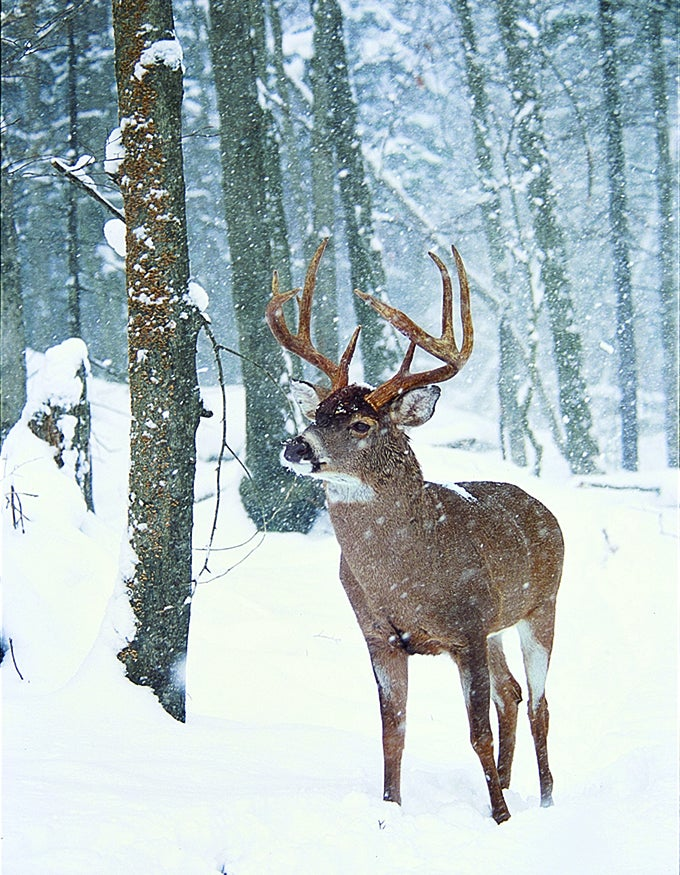 Deer Camp Doctor: Diagnosing a Cold-Weather Whitetail