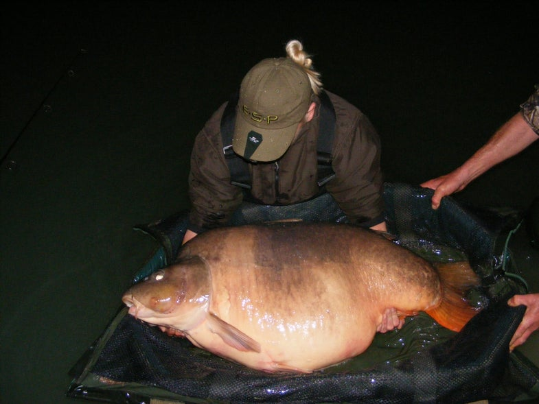 Brit Angler Crushes Female Carp Record With 84-Pound Hog