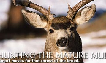 Hunting the Mature Muley
