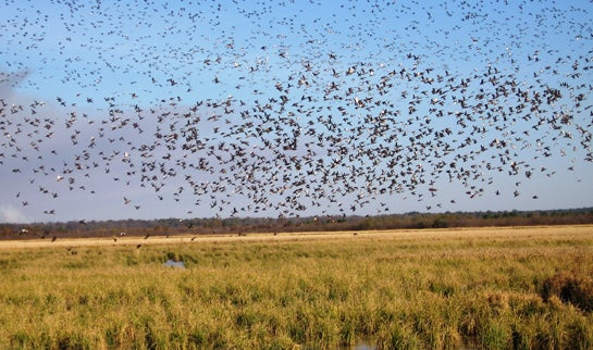 Secretary of Agriculture Tom Vilsack: Our New Program Shows Conservationists the Money
