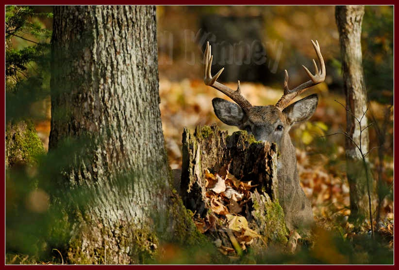 Cover Close to Home: Five Oddball Hiding Spots for Late Season Bucks