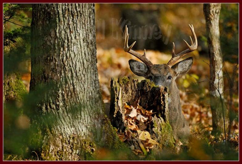 Cover Close to Home: Five Oddball Hiding Spots for Late Season Bucks