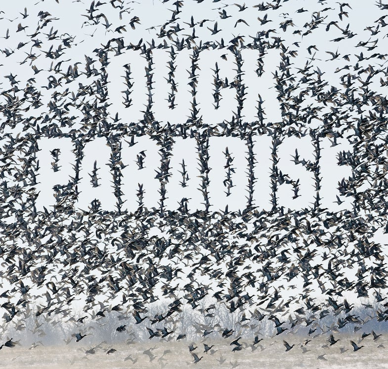 Duck Paradise: Create a Haven Where Ducks and Geese Feed, Rest, and Roost