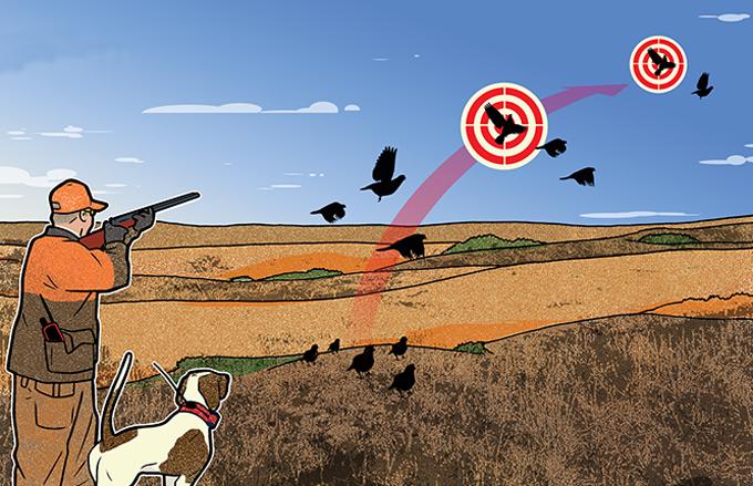 winter quail hunting