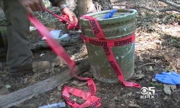 Illegal Marijuana Growing Operations Contaminate Public Forests