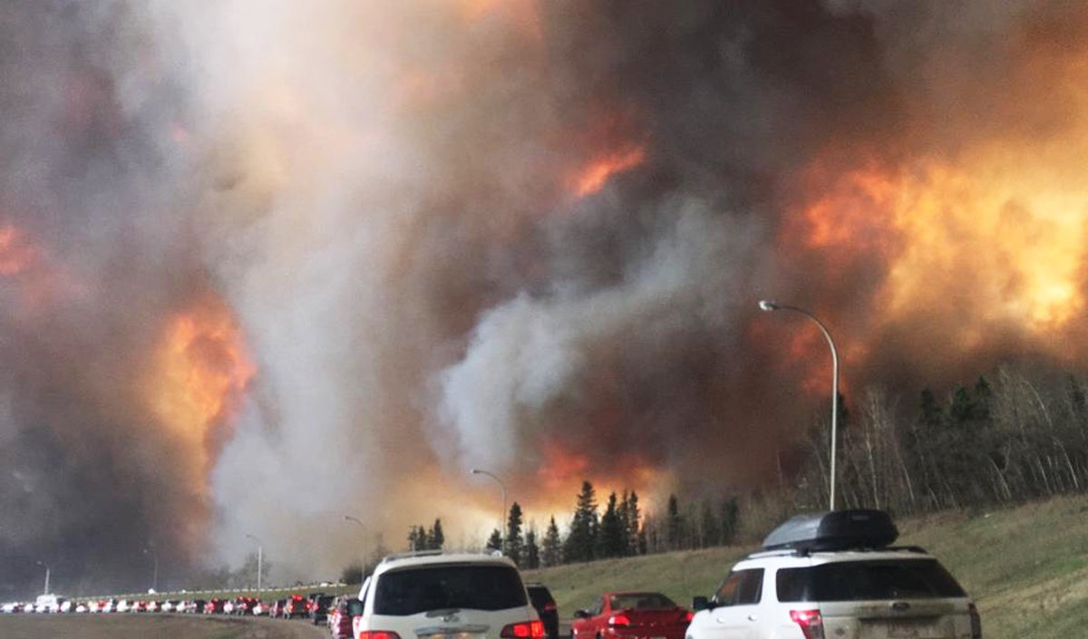 wildlife deaths, conservation news, Fort McMurray fire, conservation, wildlife,