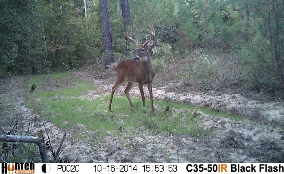 Bucks Are Showing Up in Shooting Light