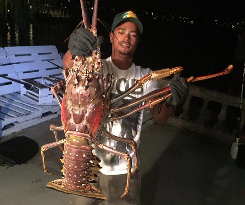 14 pound lobster