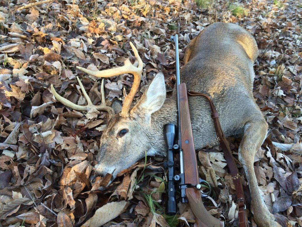 hunting deer with a sako finnbear
