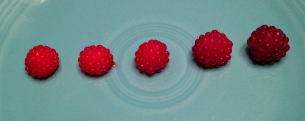 There's nothing out there that looks like a raspberry that can kill you.
