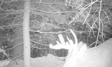 Rut Past Peak in Most Areas, But Many Bucks Acting Otherwise