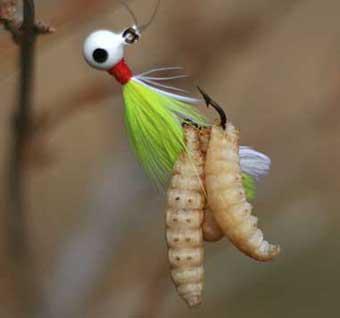Fishing With Maggots