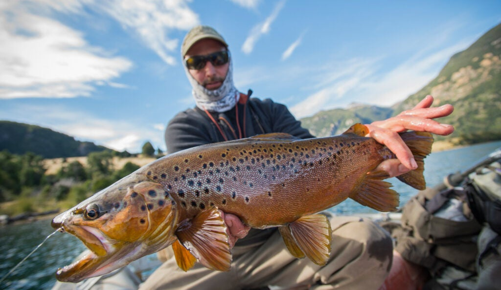 chili patagonia brown trout