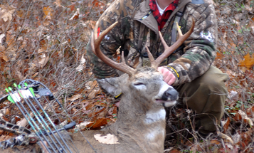 Daytime Buck Movement Picking Up Quickly