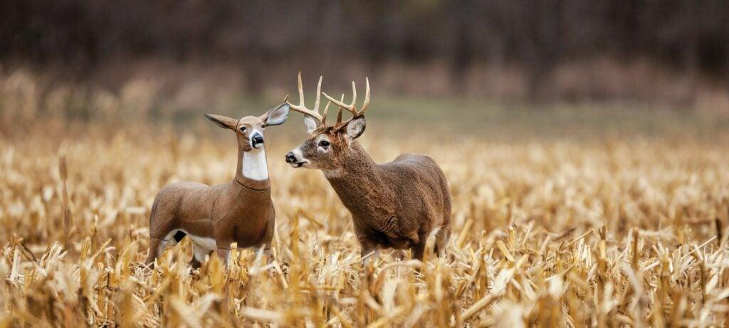 Lone doe decoy for buck hunting