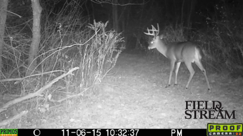 Video: The Rut is On, Then Off Again in the Northeast