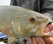 Popularity Contest: Do Looks Matter When it Comes to Game Fish?