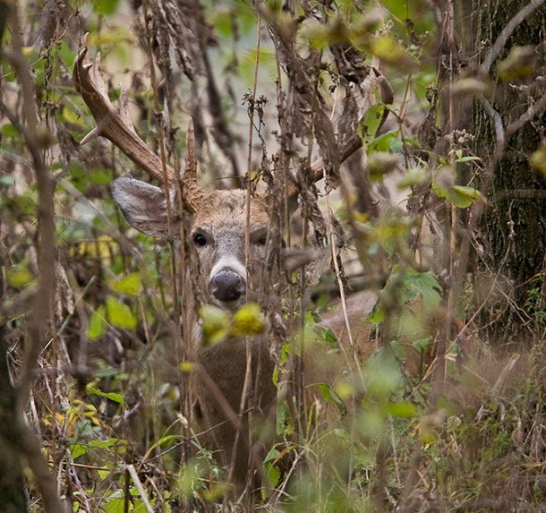 Today Is One Of The Seven Best Days To Hunt The Rut
