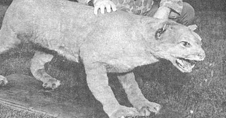 Extinct Eastern Cougar To Be Removed From Endangered Species List