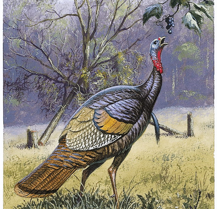 Project Turkey: Turn Your Land into Gobbler Haven
