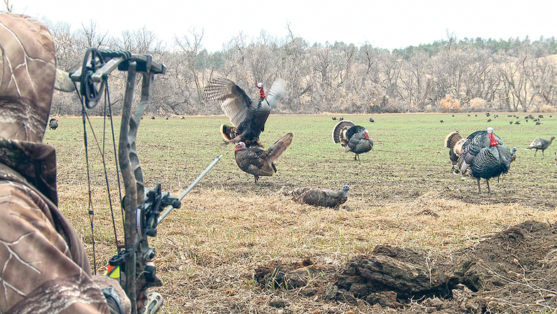 Bowhunting for Turkeys: Pick a Gang Fight