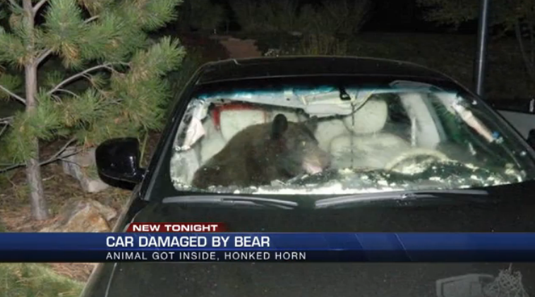 Bear Breaks Into Car and Does $15,000 in Damage