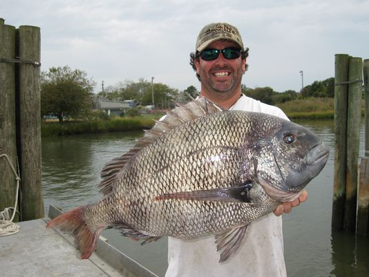 Angler Breaks State Record and Bakes 17-Pound Sheepshead