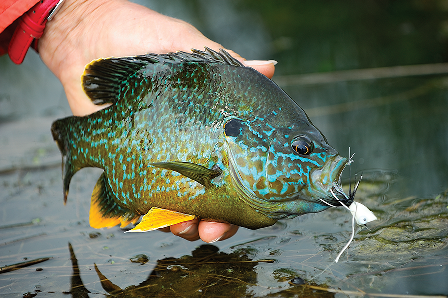 Fly Fishing For Panfish: How to Practice Your Technique
