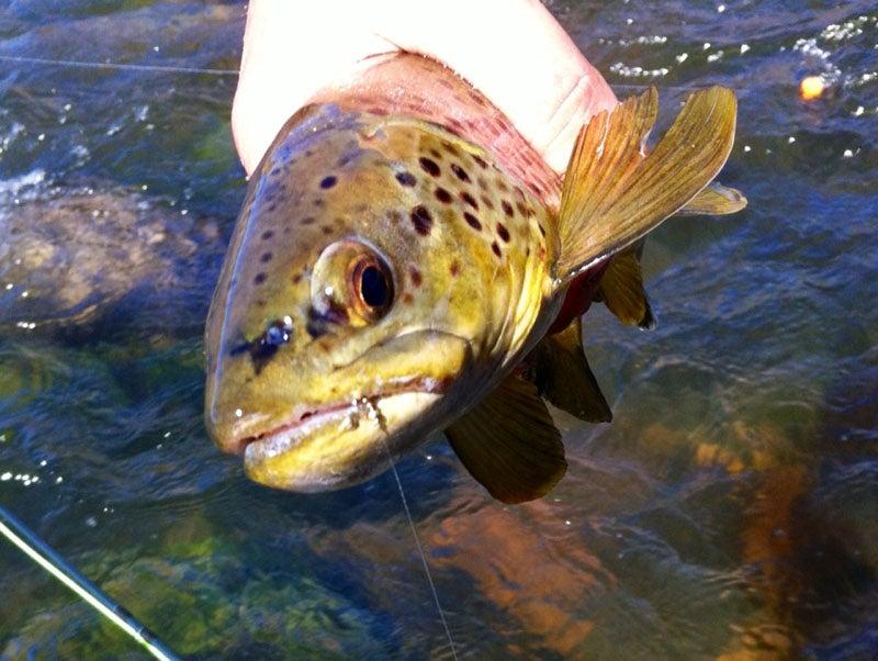 httpswww.fieldandstream.comsitesfieldandstream.comfilesimport2014importImage2012photo23catchbook1_48.jpg