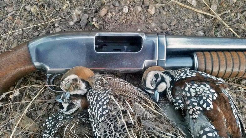 quail gun