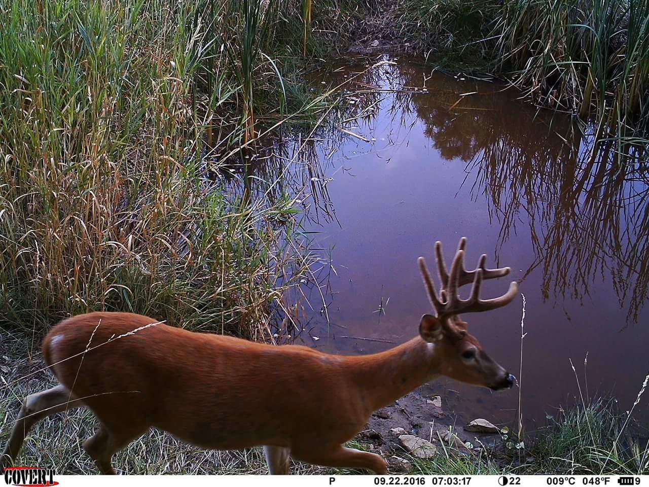 Washington State buck