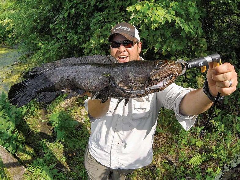 snakehead fishing teaser