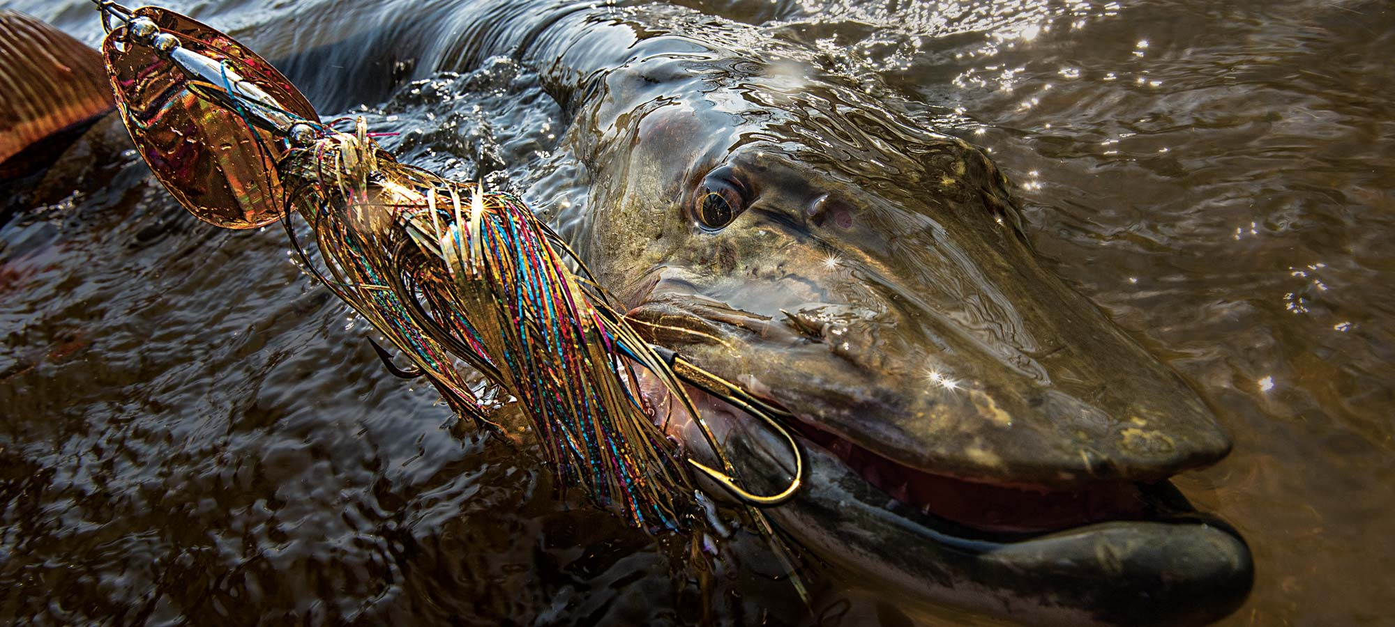 Mississippi River Muskie Fishing