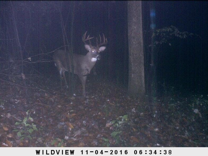 Northeast Rut Report: Best-Day Forecast and Beyond