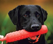 Turn Your Dog into a Turbo Retriever with Backyard Obedience Drills