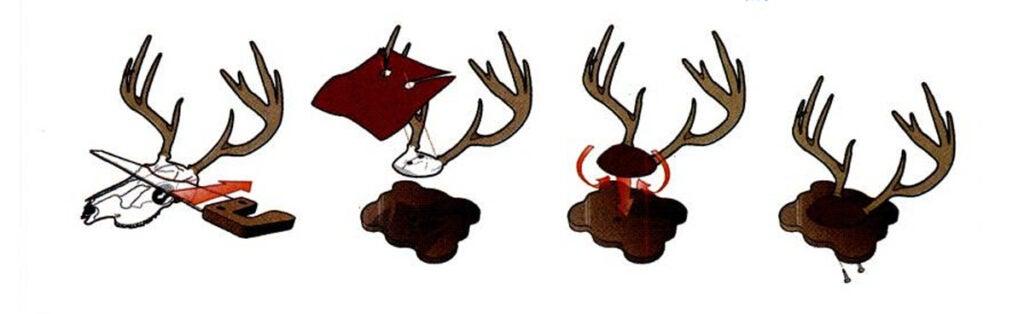deer skull mount