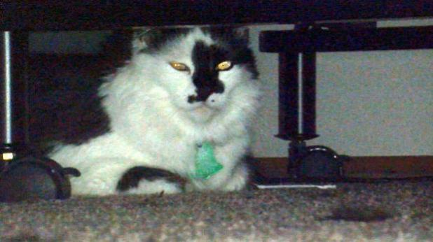 Weird Animal Attack: House Cat Corners Oregon Family, Owner Calls Police