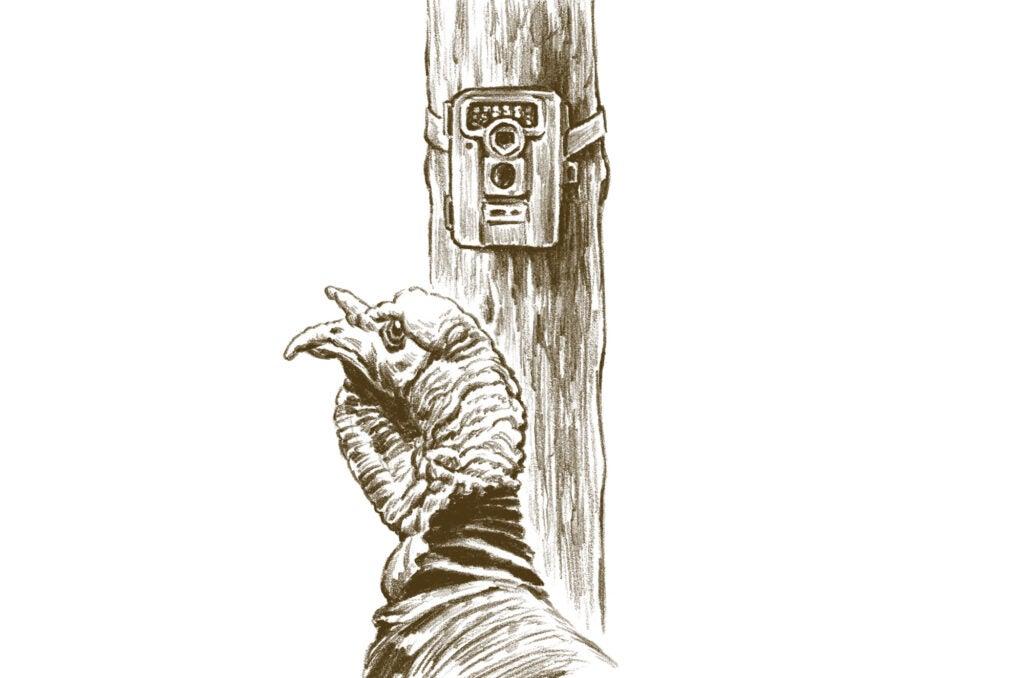 turkey trail cam