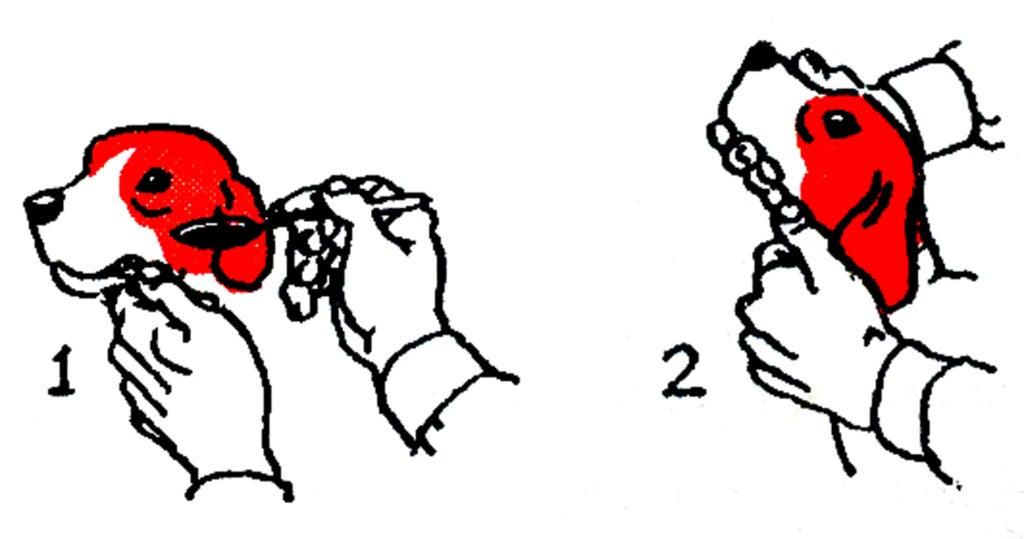 giving a dog medicine