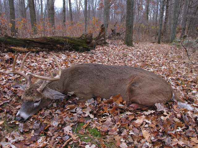 It Pays to Fine-Tune Your Rut Tactics, Though  Sometimes You Might Just Get Lucky