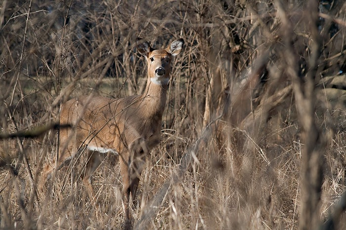Source of Chronic Wasting Disease Outbreak Confirmed in Iowa