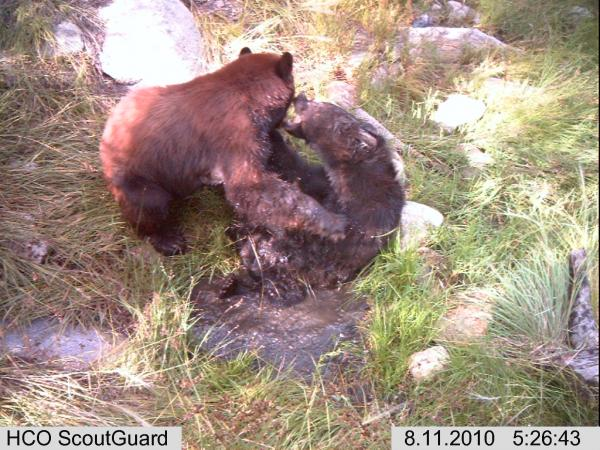 The 25 Best Photos from the F&S Trail Cam Photo Contest (Round IV)