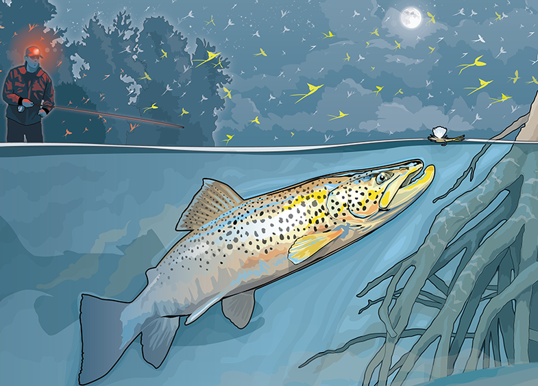 Nighttime Tactics for Big Brown Trout